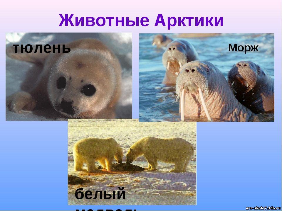 Презентация для детей арктика - скачать смотреть бесплатно cлайд 26